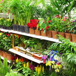 Flores e Plantas Naturais