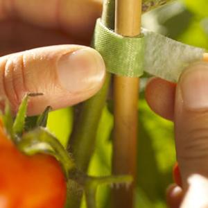 Proteção de Cultivo