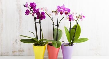 5 plantas que não precisam de sol e podem ficar dentro de casa segundo a indicação do especialista
