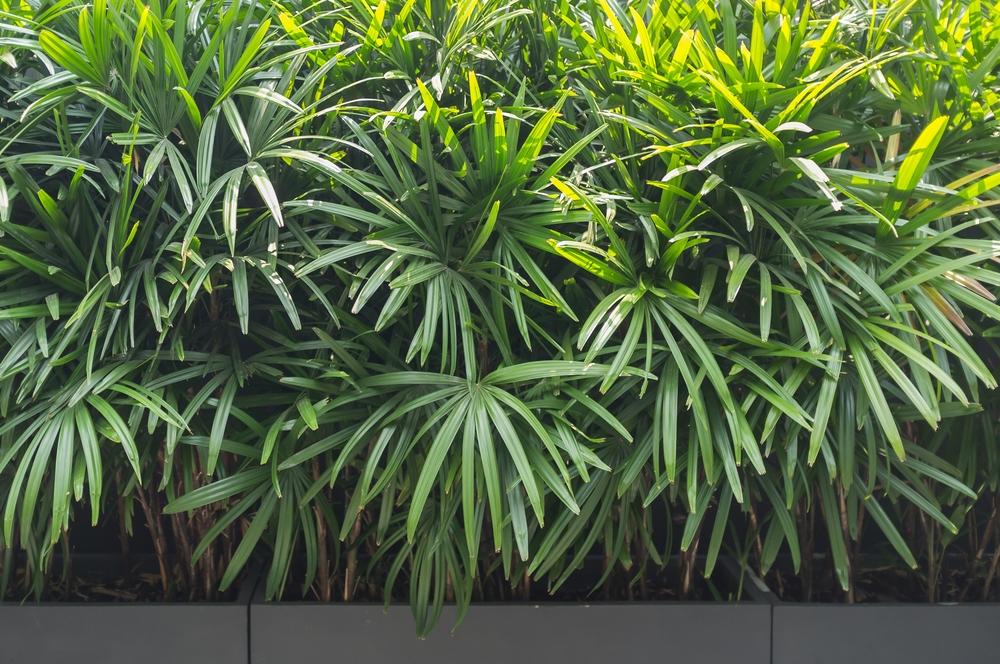 5 plantas que n o precisam de sol e podem ficar dentro de casa for Plantas de interior leroy merlin