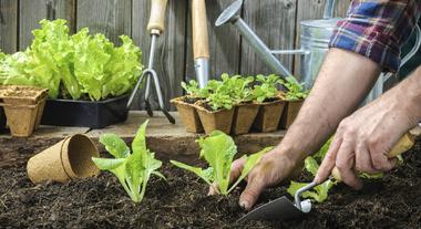 6 dicas de especialista para cuidar do jardim