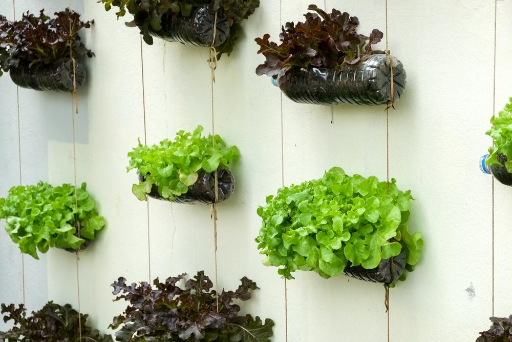 Ideias baratas para montar jardim vertical e horta Jardines verticales baratos