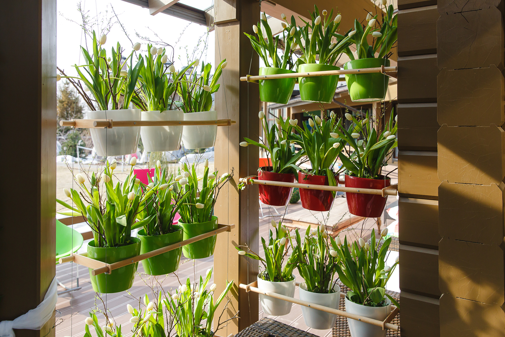 Ideias baratas para montar jardim vertical e horta for Plantas baratas