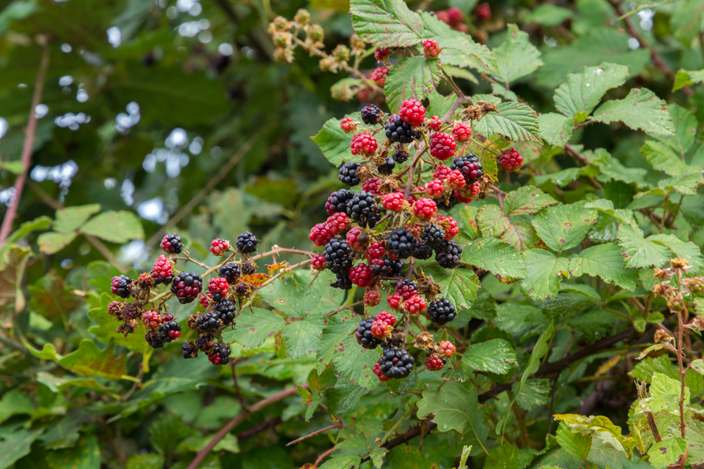 7 árvores frutíferas de pequeno porte que você pode ter no seu quintal