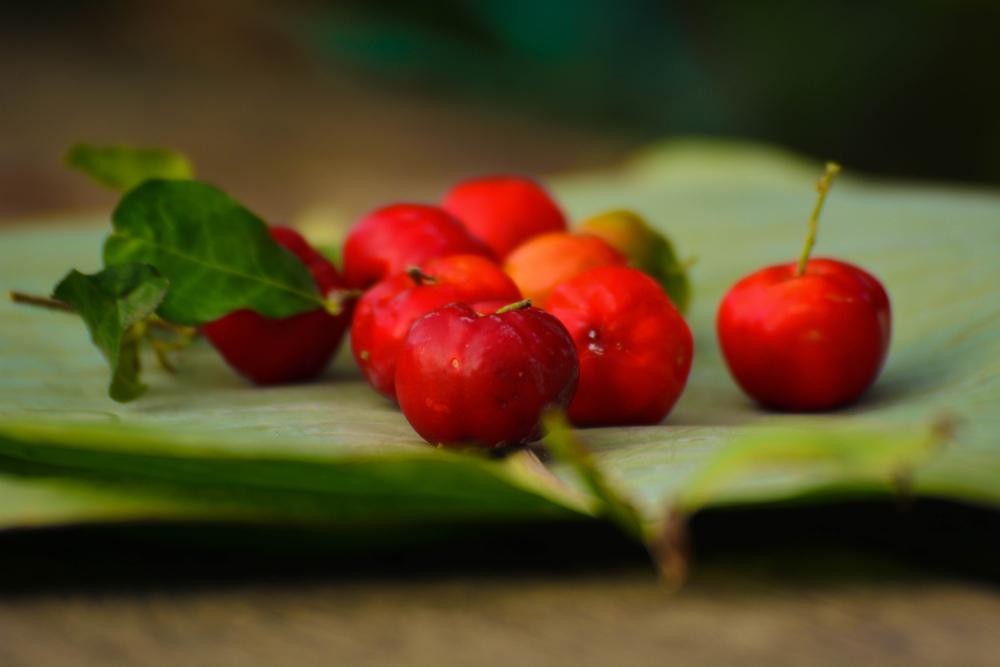 7 Arvores Frutiferas De Pequeno Porte Para Voce Ter No Quintal