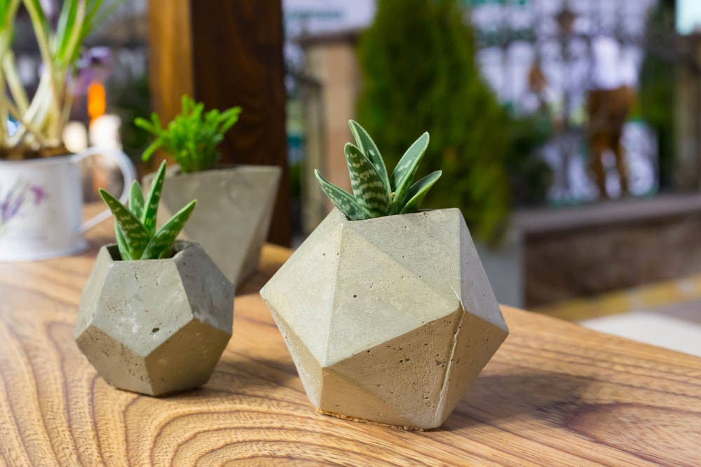 7 ideias para customizar e decorar vasos para plantas for Plantas baratas