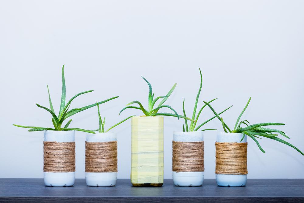 7 ideias para customizar e decorar vasos para plantas