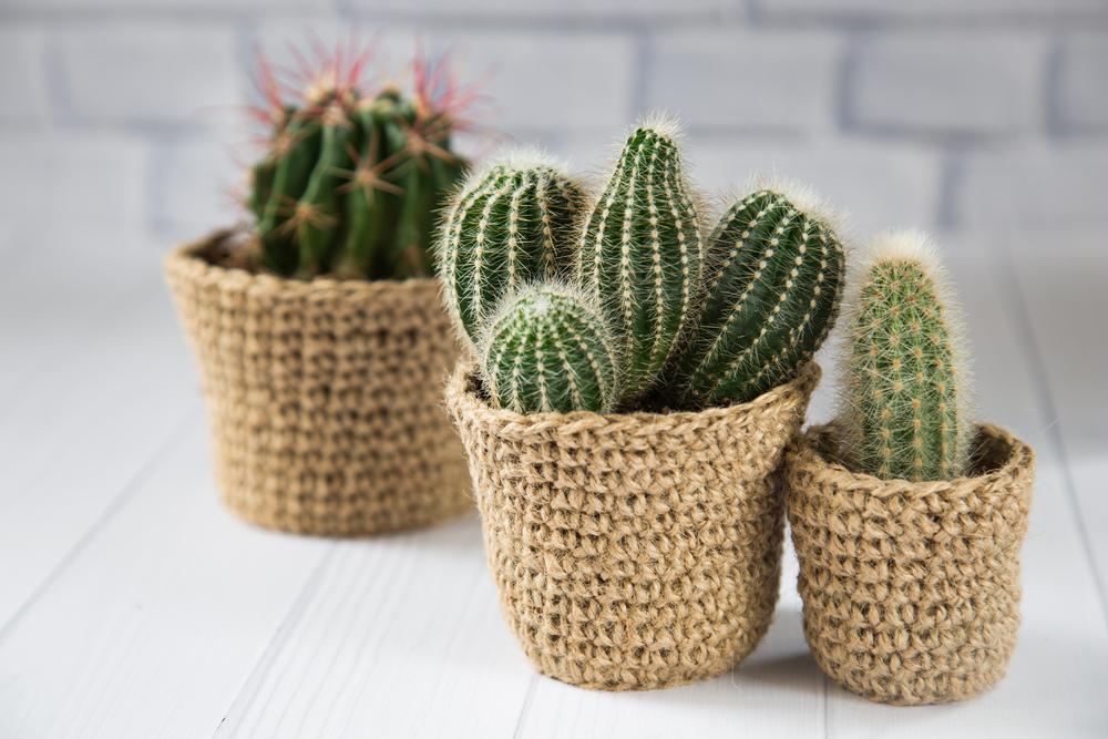 7 ideias para customizar e decorar vasos para plantas - Plantas de plastico baratas ...