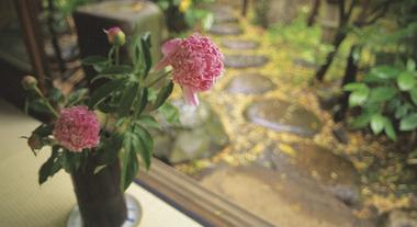 Aprenda a cultivar plantas naturais