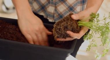 Aprenda a montar uma Horta em Espaço Pequeno