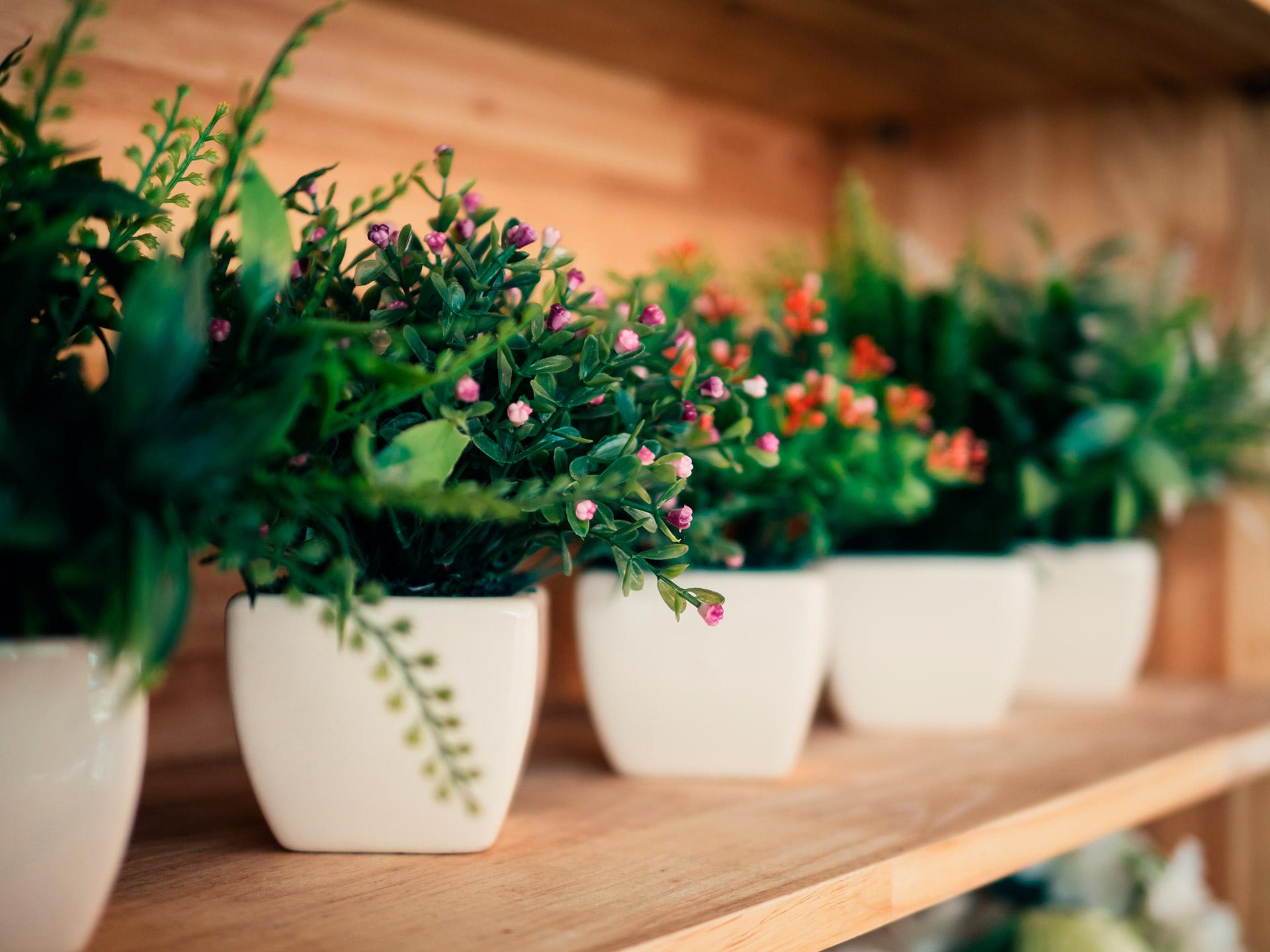As flores artificiais n o s o mais as mesmas confira for Plantas de interior leroy merlin