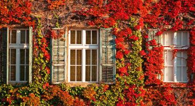 Belo jardim que escala as paredes