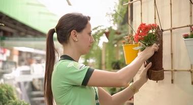 Como montar um jardim vertical