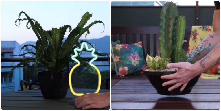 Vasos de plantas e um enfeite em formato de abacaxi