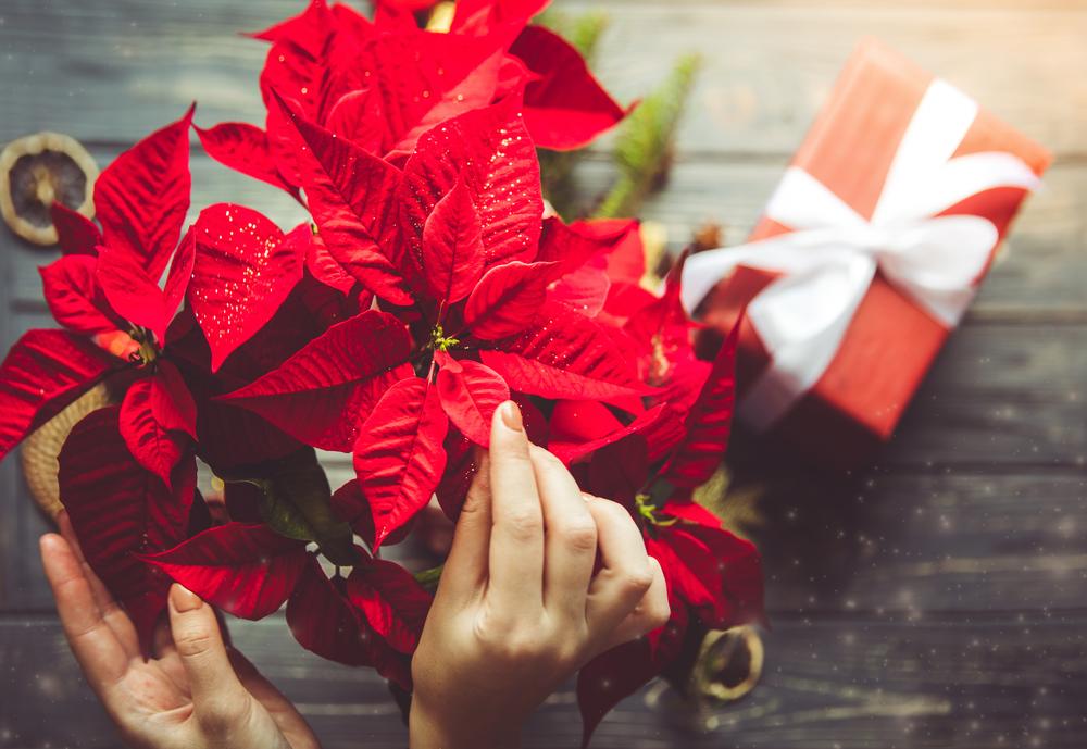 Decoraç u00e3o de Natal 2017 como fazer ideias simples e baratas -> Decoração De Natal Jardim