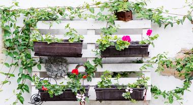 Jardim suspenso com paletes de madeira: passo a passo de como fazer ensinado por uma paisagista