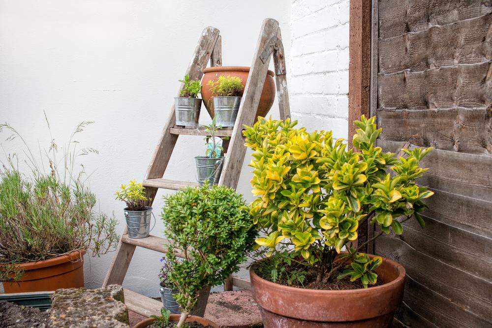 Jardins pequenos decorações com pedras flores folhagens baratas # Decoração De Jardins Com Pedras E Flores