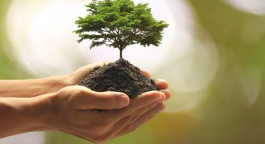 """Leroy Merlin celebra o Dia da Árvore e suas certificações """"Carbon Free"""""""