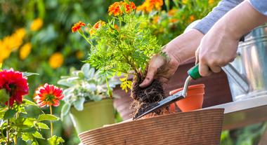 Mantas de drenagem facilitam os cuidados com o jardim e evitam ervas daninhas e mosquitos