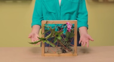 Plantas aéreas: aprenda a fazer uma moldura para a sua passo a passo