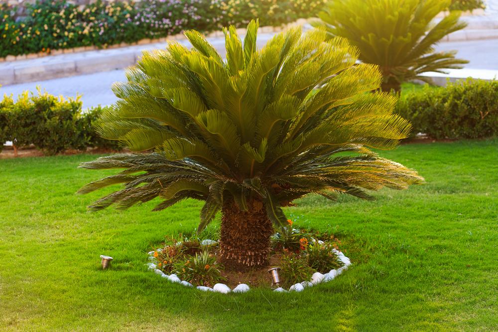 Plantas ornamentais para jardim: 5 nomes indicados por um paisagista para criar uma decoração original