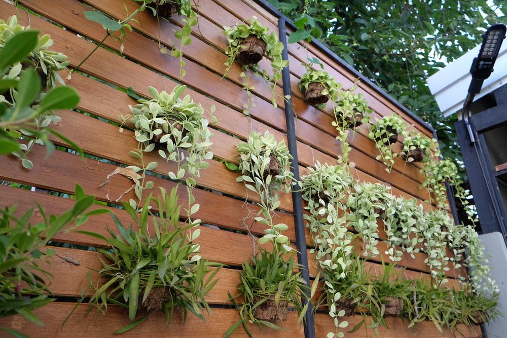 Plantas para jardim externo vertical de inverno tipos - Plantas para vallas ...