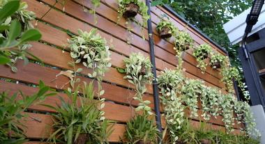 Plantas para jardim externo, vertical e de inverno: conheça tipos duradouros e resistentes ao sol