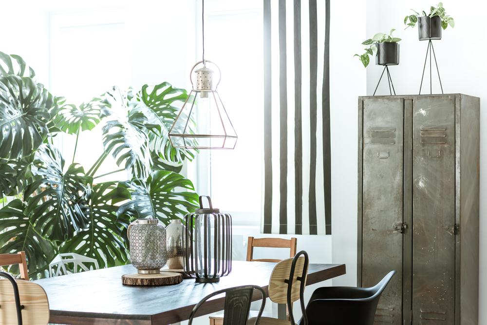Plantas tendência: confira as espécies que estão nos apartamentos modernos por aí