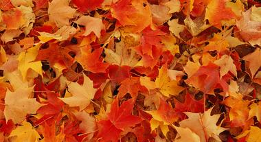 Saiba como cuidar do seu jardim no outono