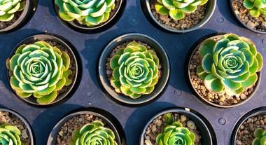Tipos de suculentas: os 10 mais conhecidos no Brasil e as dicas de uma paisagista de como cuidar