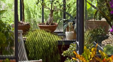 Tudo o que você precisa saber sobre jardim de inverno