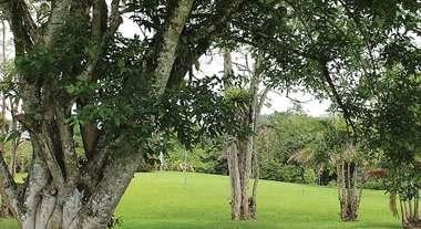 Utilize produtos de proteção e cultivo em diversas etapas da plantação