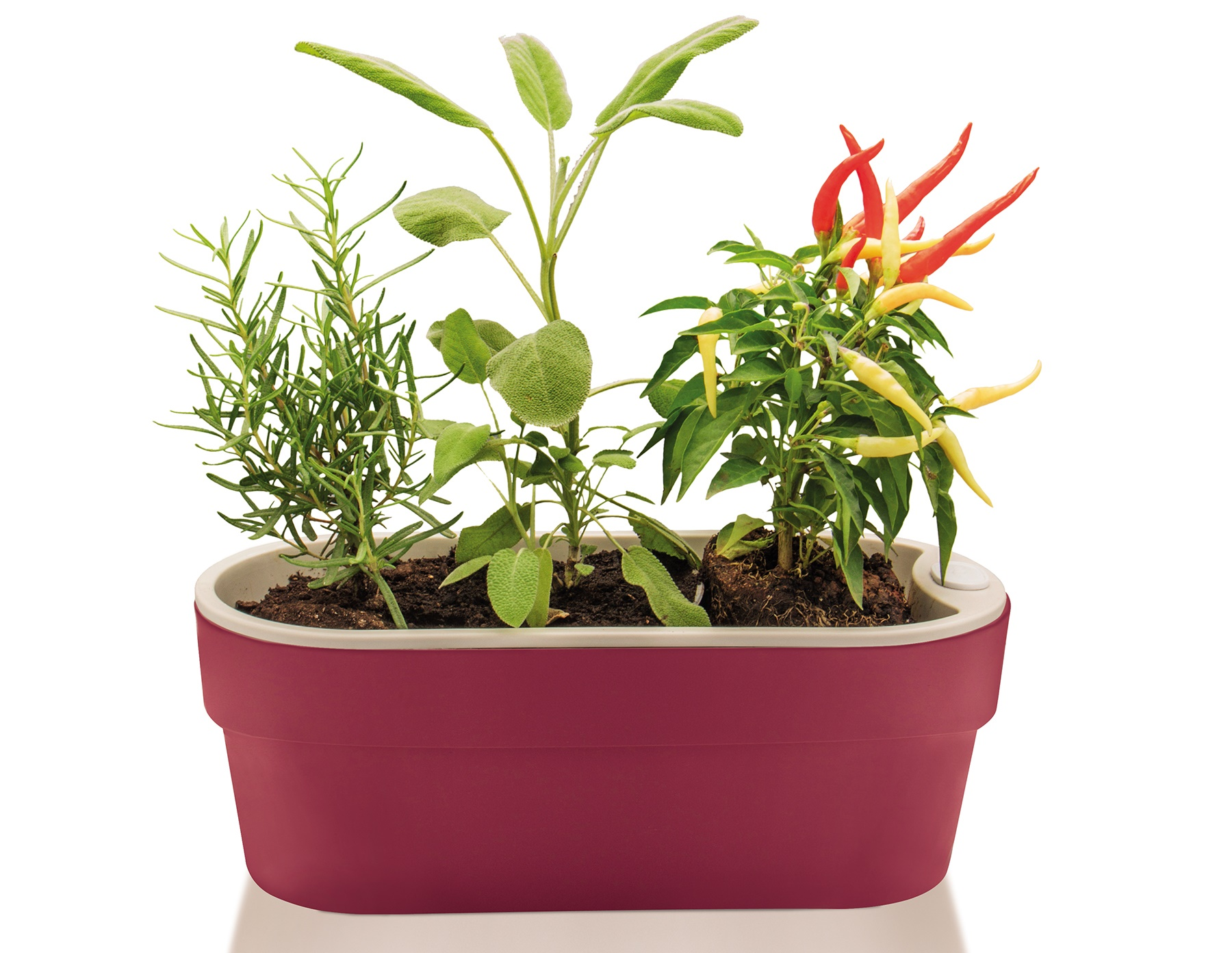 Vaso autoirrig vel novidade que mant m as plantas hidratadas for Plantas baratas