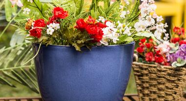 Vasos dão um toque especial ao ambiente