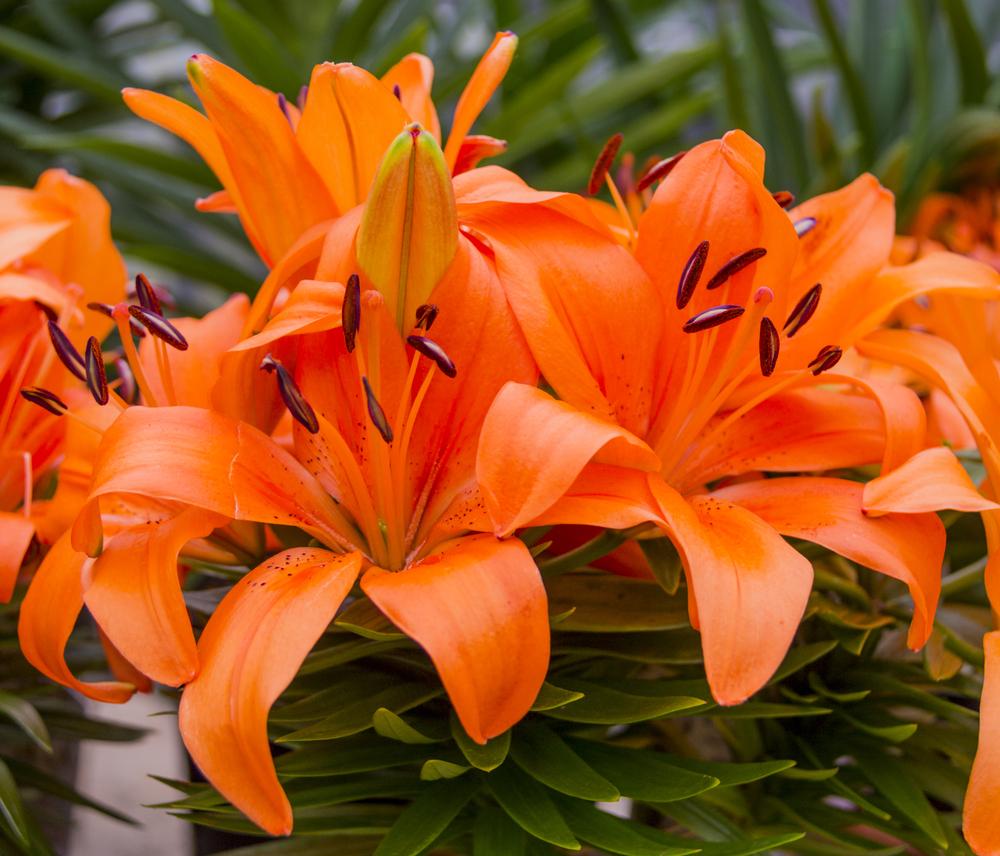 Veja Como Montar Um Jardim Com Plantas E Flores Da Primavera