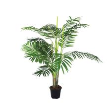 Areca Bambu Pote 17