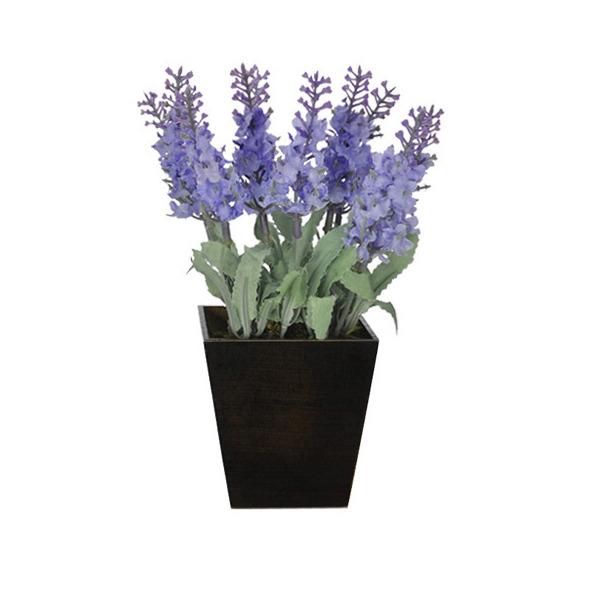Lavanda lil s vaso 20cm leroy merlin for Lavanda coltivazione in vaso