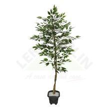 Árvore Ficcus com Vaso 180cm Florarte