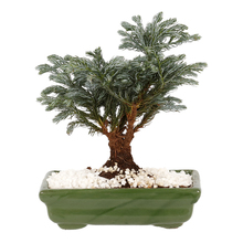 Bonsai Júnior Vaso 1,1L