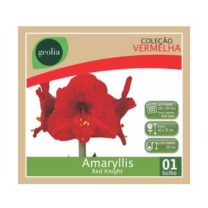 Bulbo Amaryllis Red Knight Geolia