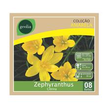 Bulbo Zephyranthus Citrina Geolia
