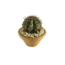 Cacto Bola Mini Vaso 10cm