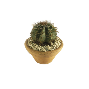 Cacto bola mini vaso 10cm leroy merlin for Vaso terracotta leroy merlin