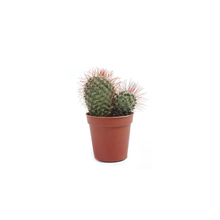 Cacto Mini Pote 06