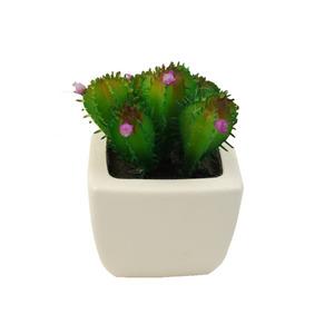 Cactus Verde Vaso 8cm