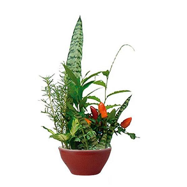 Resultado de imagem para vaso com 7 ervas