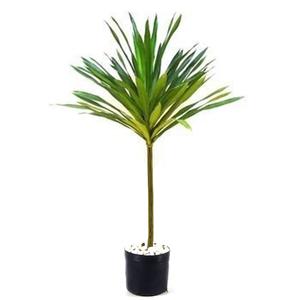 Dracena Arborea 150cm Pote 30