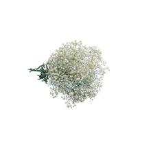 Flor de Corte Gypsofila 3 Hastes Maço