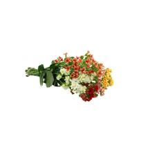 Flor de Corte Kalanchoe 3 a 5 Hastes Maço