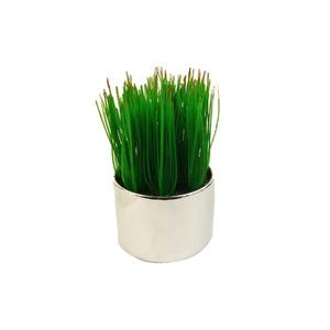Grama Verde Vaso 10cm